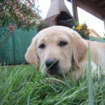 Le difficoltà quotidiane con un cane <br>(con Mirtilla & Kora)