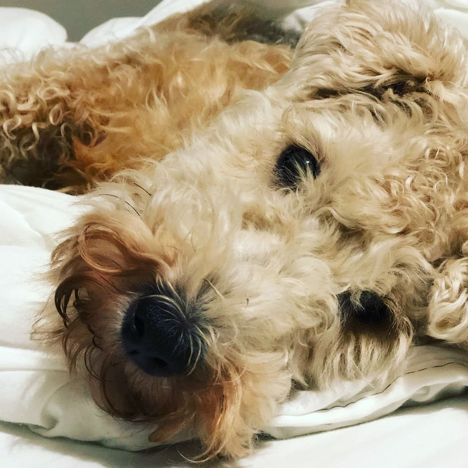 Mi sento in colpa: ho sgridato il mio cane! <br>(con Mirtilla & Kora)
